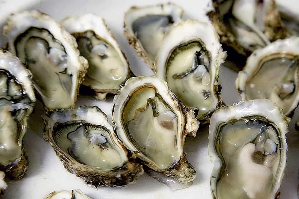 oesters weilandshof